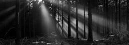 Solstref igennem graner i Rold Skov, af lebaf